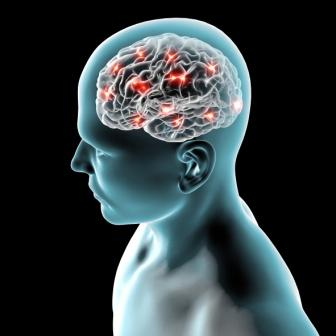 image of a human brain on the mindfulness page